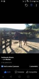 Égua Picada