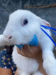 Vendo coelhos branquinhos.
