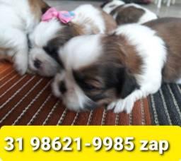 Título do anúncio: Canil Filhotes Cães Líder BH Shihtzu Poodle Basset Lhasa Yorkshire Maltês