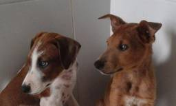 Doa-se três cachorrinhs