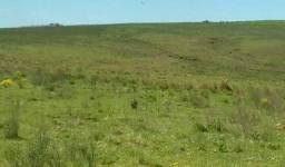 178 hectares para arrendamento