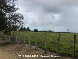 Top Fazenda 22,5 alqueirão