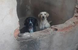 Doação-cachorros