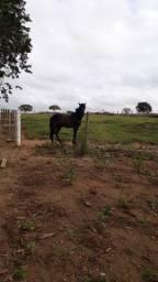 Cavalo barato