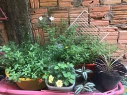 Variedade de Plantas lindas