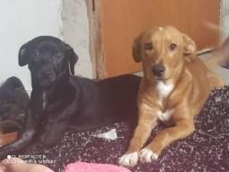 Adoção, 2 cachorros, 1 ano. URGENTE