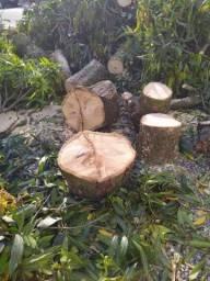 Poda e corte de árvore