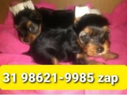 Título do anúncio: Canil Filhotes Cães Top BH Yorkshire Maltês Poodle Lhasa Basset Beagle Shihtzu