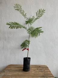 Plantas e Mudas Nativas