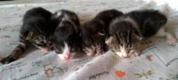 Gatinhos p/ Adoção!