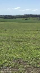 Fazenda em Piracanjuba-Go!