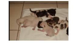 Filhotes de gatos para doar