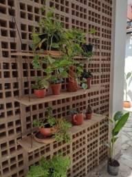 Título do anúncio: Prateleira com plantas