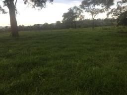 Fazenda em Chapada dos Guimarães com 153 Hectares Terra Preta
