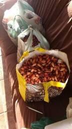 Vendo 50 kg de pinhão