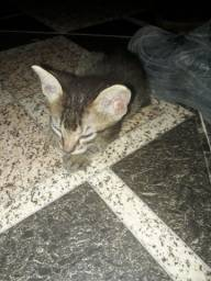 Gatinhos para adoção com 1 mês de vida