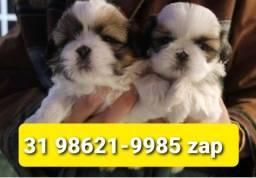 Título do anúncio: Filhotes Cães Top em BH Shihtzu Basset Lhasa Yorkshire Maltês Poodle