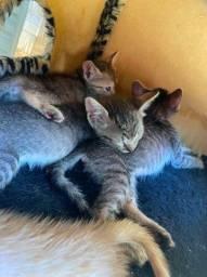 Estou doando filhote de gato