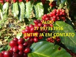 Carga para cafe e materia organica