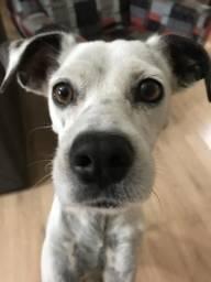 Doo cachorro fêmea sem raça definida