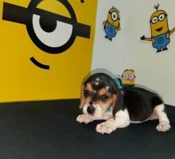 Filhote espetacular de beagle