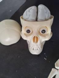 Esqueleto corpo humano