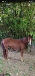Cavalo para Lida