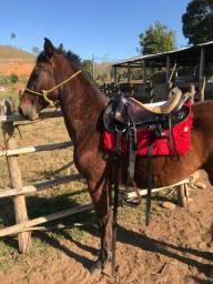 Cavalo marchador pra rolo ou venda em bezerro