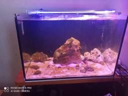 Aquario marinho 120l com sump traseiro