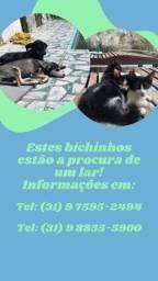 Filhotes de gato e cachorro