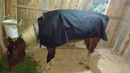 Cavalo QM tubiano