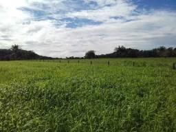 Fazenda em MT com 324 Hectares bem formada, completa