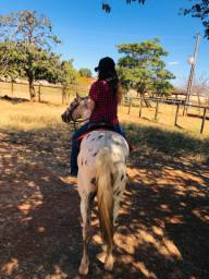 Cavalo machador