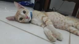 Uma gata