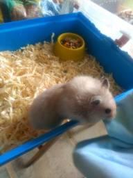 Gaoila de hamster Completa