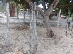 Mini-sítio Paracuru