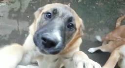 Cachorrinhas de 3 meses pedindo para ser adotadas!