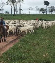 Vendo Fazenda de 287 Alqueires na região de Paranã-TO
