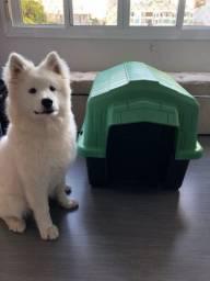 Casa / casinha cachorro verde e preta G