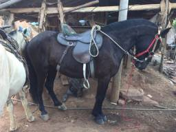 Vendo cavalo macha picado