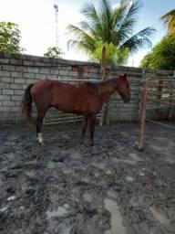 Cavalo a vender