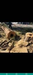 Título do anúncio: Corte e poda de árvores com total garantia e segurança