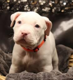 Últimos disponíveis: O cão mais leal!