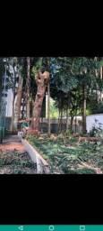 LEBLON poda de árvore em até 12x