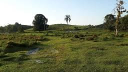 Fazenda 32 alqueires 28 de Pasto (Willian Ricardo)