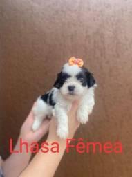 Feminha de Lhasa