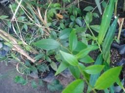 Plantas Medicinais (Aproveite)