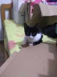 Doação de gatinha ?