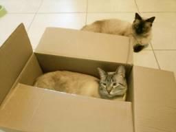 Doação casal de gatos