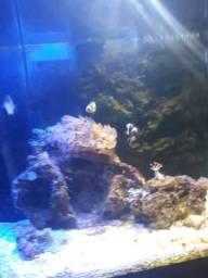 Aquário marinho nano